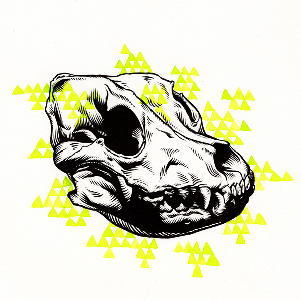 Drawn pit bull skull Mathews Patrick pitbull_skull