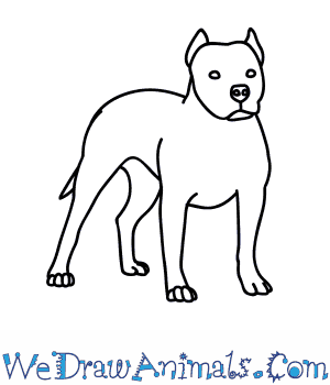 Drawn pitbull Dog  Pitbull How Draw