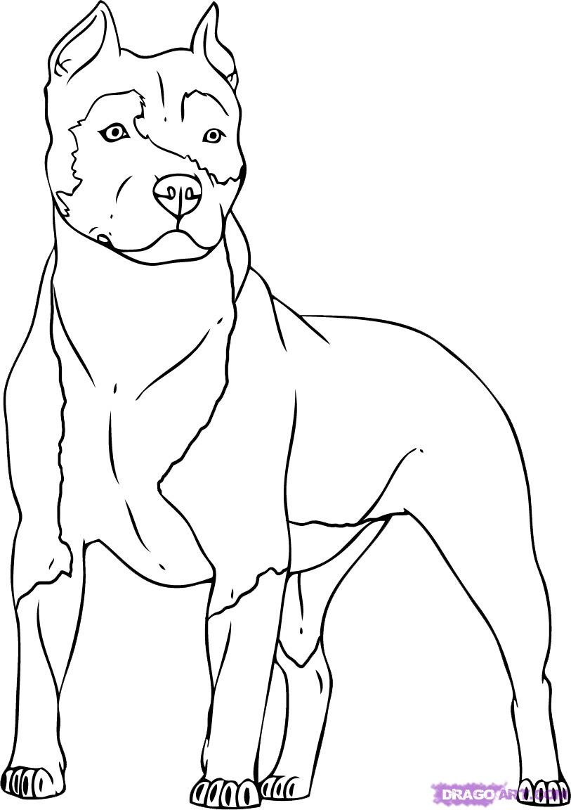 Drawn pitbull Free Stenciling Definition dogs h3dwallpapers