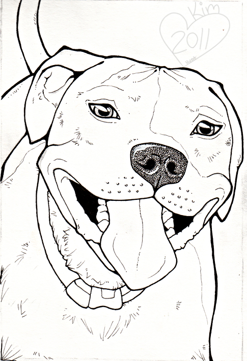 Drawn pitbull A Image draw Drawings result