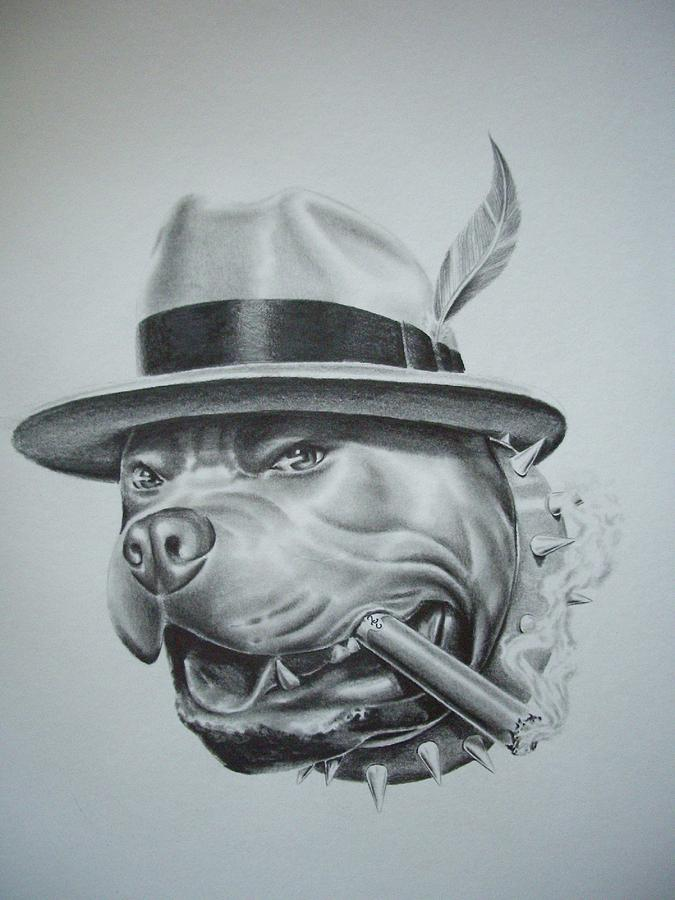 Drawn pitbull gangster Jpg jpg hernandez jorge (675×900)