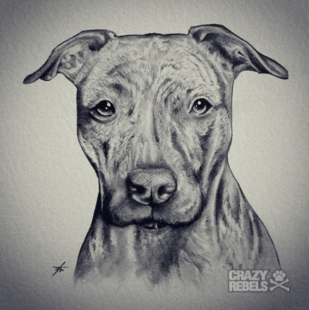 Drawn pitbull spoiled Mila #americanbully Pit #dog art