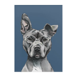 Drawn pitbull spoiled Print Pit Framed Drawing Zazzle