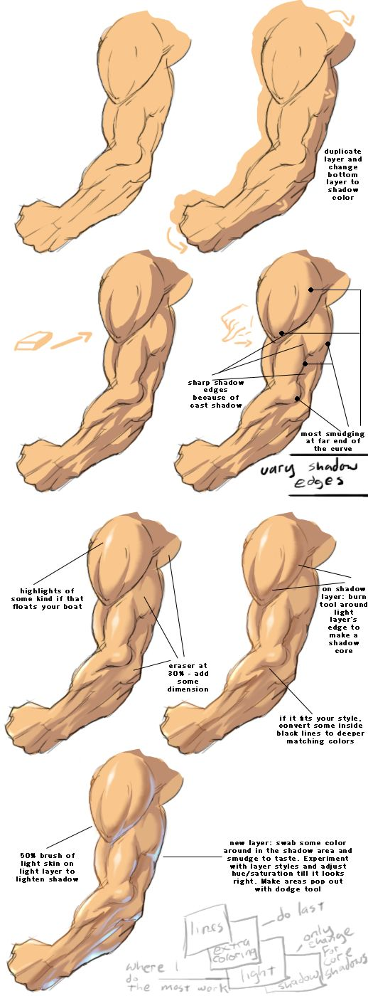 Mussel clipart right arm 518 × Scaled Anatomy on