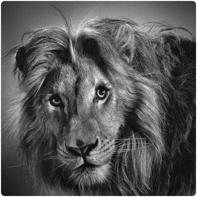 Drawn pixel art realistic Animals Animals Pencil Pixels Drawings