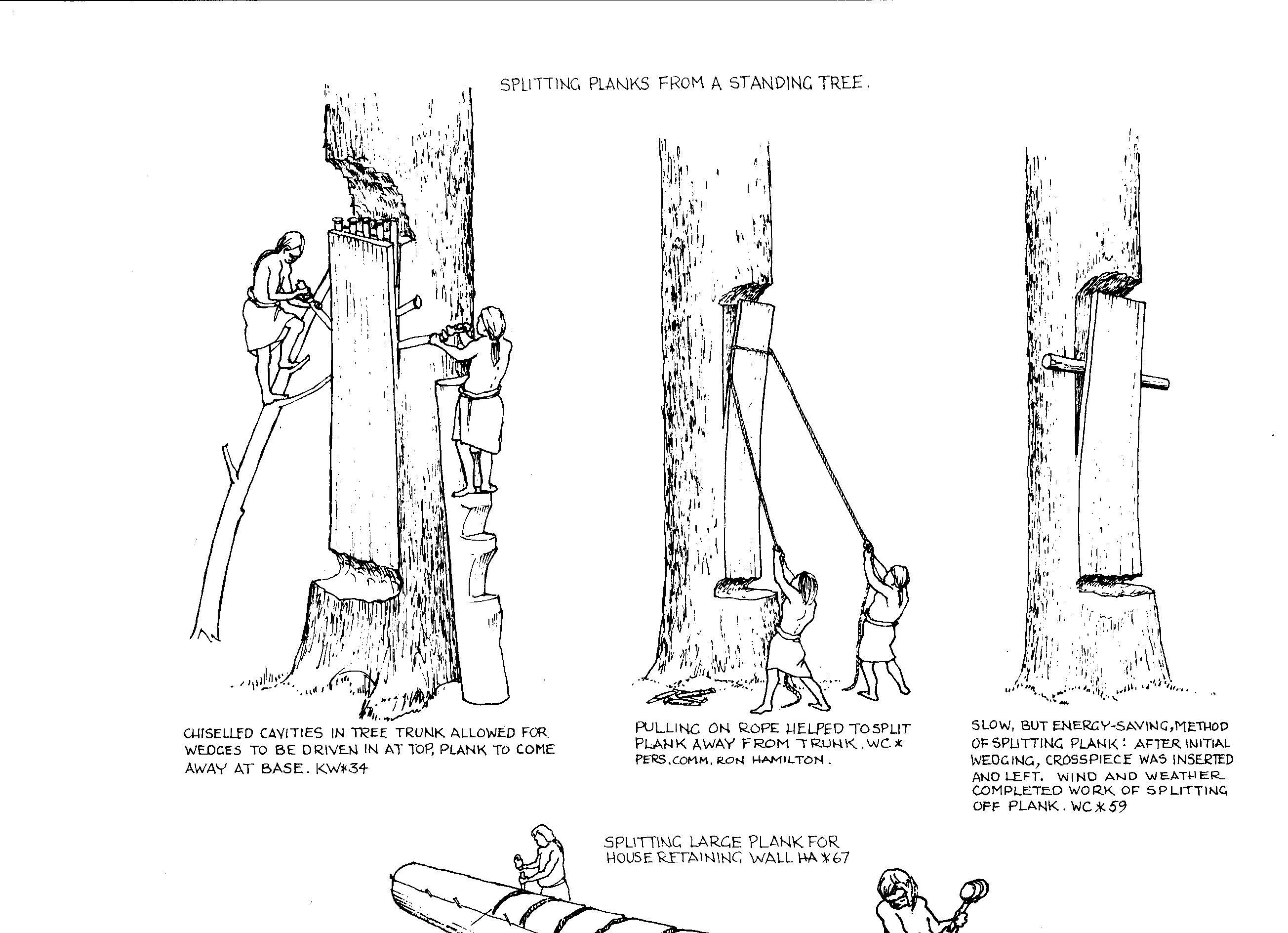 Drawn planks school Hilllary Services Tree cedar jpg
