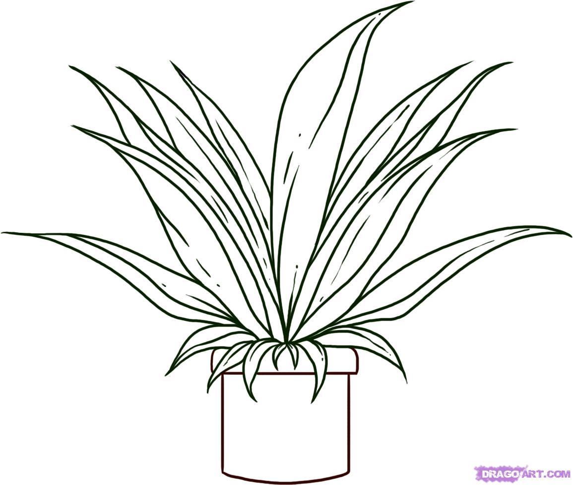 Drawn plant Culture Online draw Pop Plant