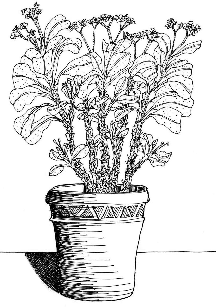 Drawn plant Drawing Plants Plants Hand +
