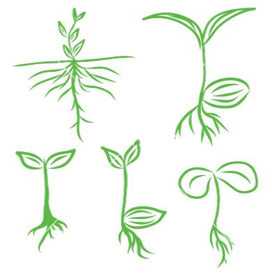 Drawn plant Seeding 1492683 draw  plants