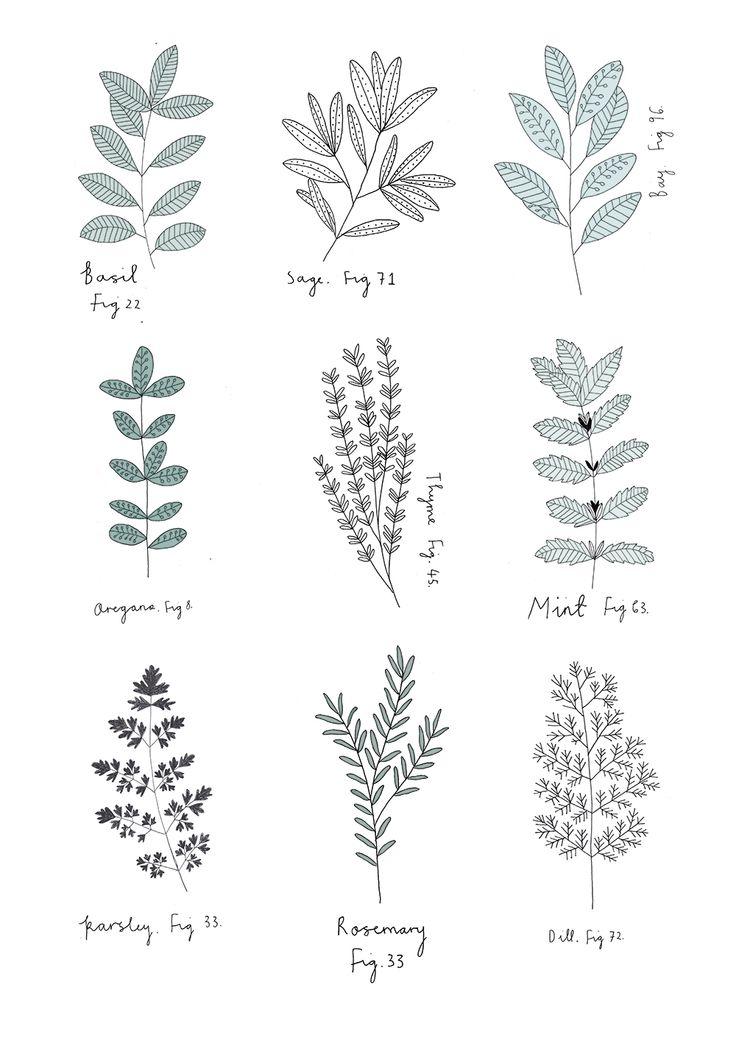 Drawn plant mexican flower Botanical  Sanny Herbs van
