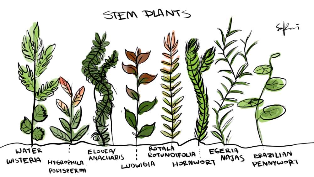 Drawn plant And A from drawn stems