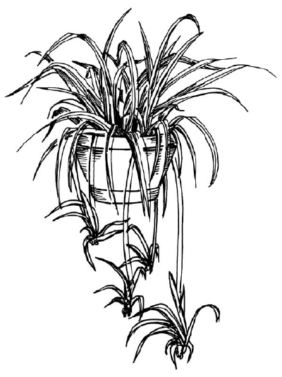 Drawn spider detailed Plant this easy Flower in