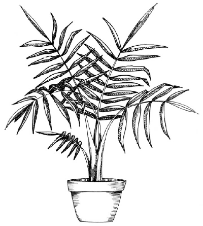 Drawn plant To a Gallery in How