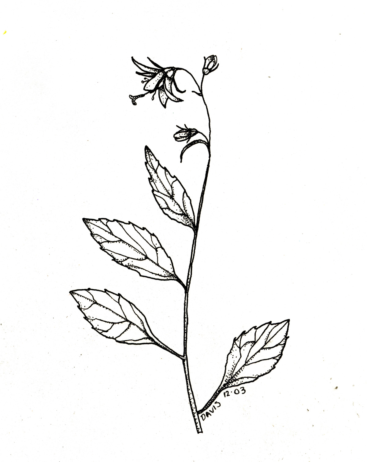 Drawn plant Archives From the Ramekin –
