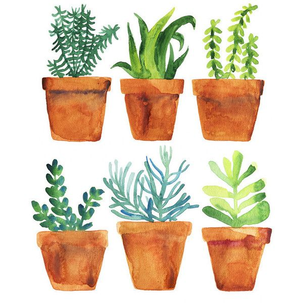 Drawn pot plant art And 25+ on more this
