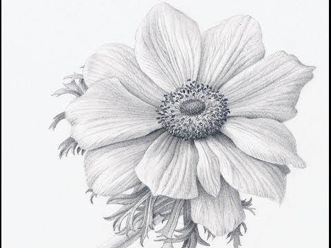 Drawn plant beautiful flower Tutorials: Drawing and 189 on