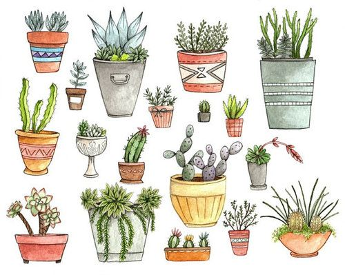 Drawn plant mexican flower And images cactus Pin Pinterest