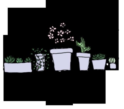 Drawn plant cactus succulent Drawing art  flowers art