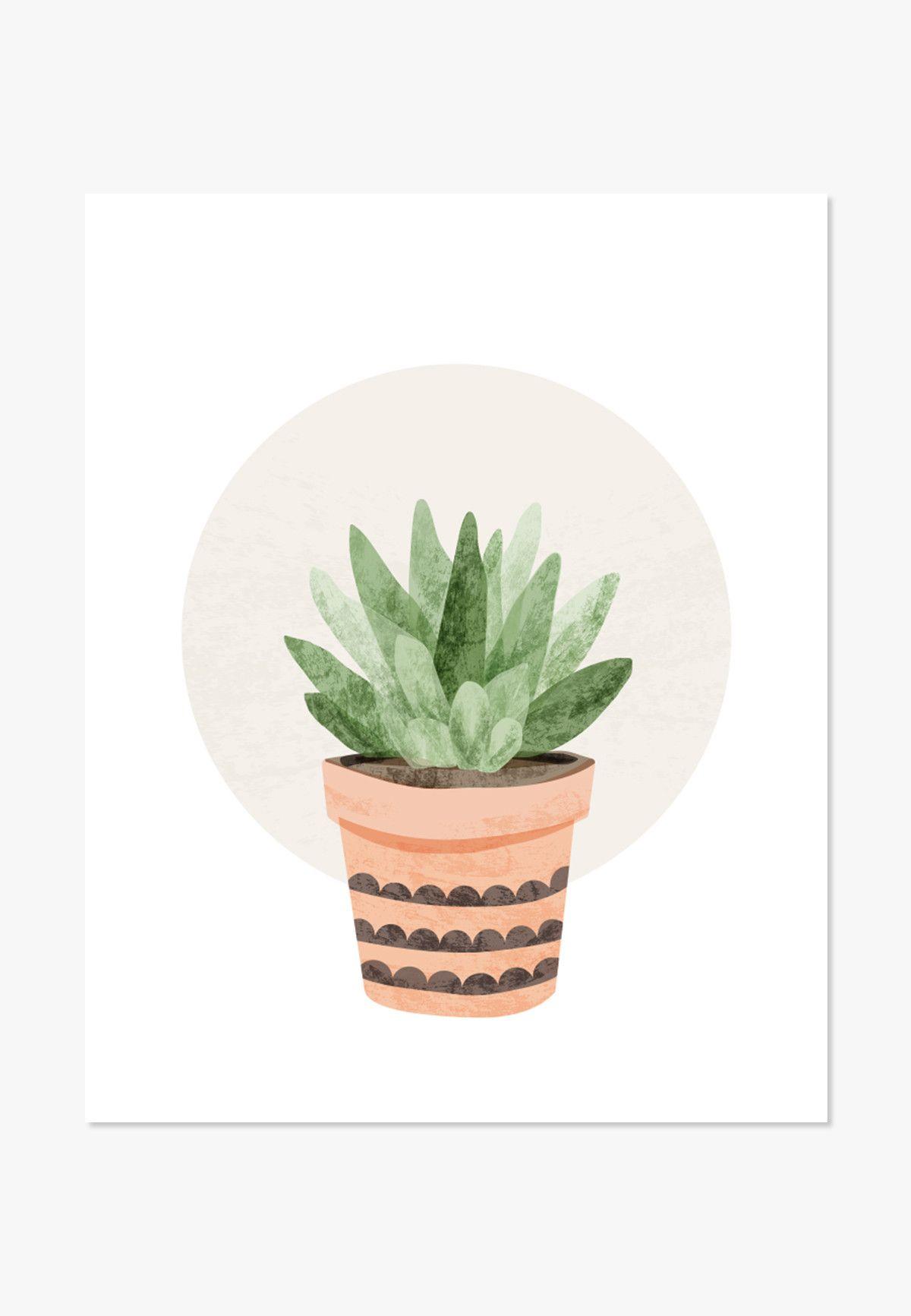 Drawn plant cactus succulent Print: Small  succulent plants