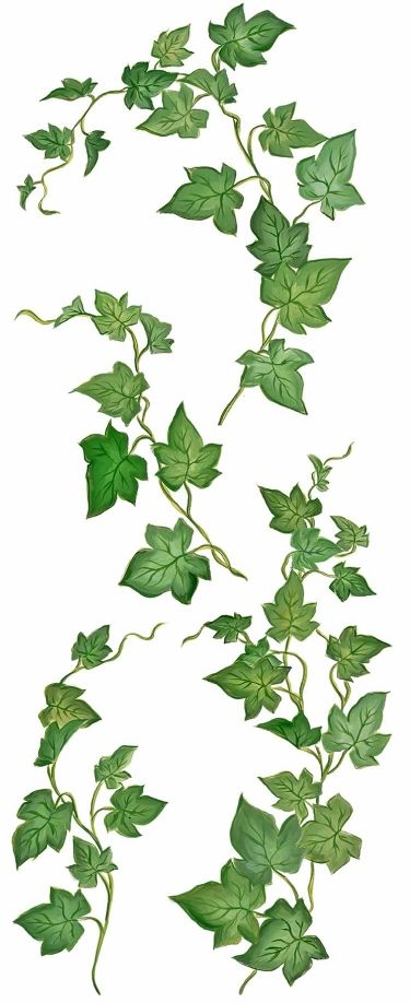 Drawn ivy Pinterest ideas 25+ Ivy on