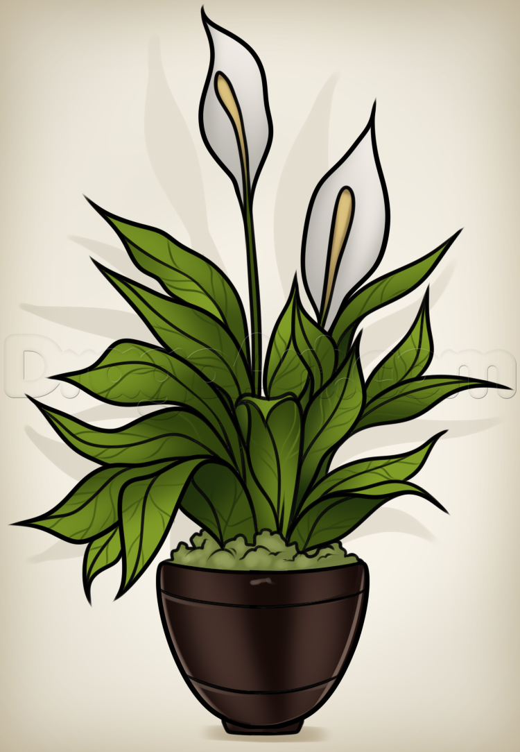 Drawn pot plant real Plant Pop a a Peace