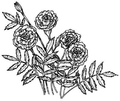 Drawn plant mexican flower 189 Pinterest Tutorials: Draw Flowers