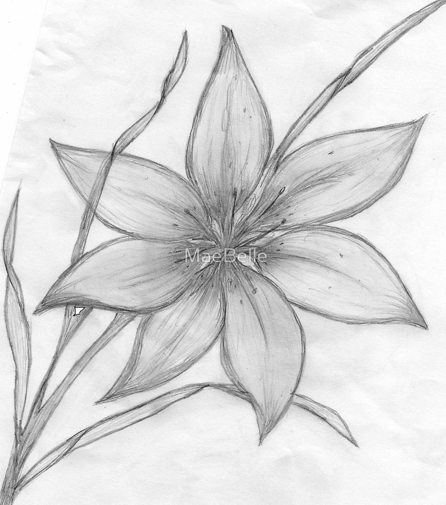 Drawn pencil basic Redbubble Lily by