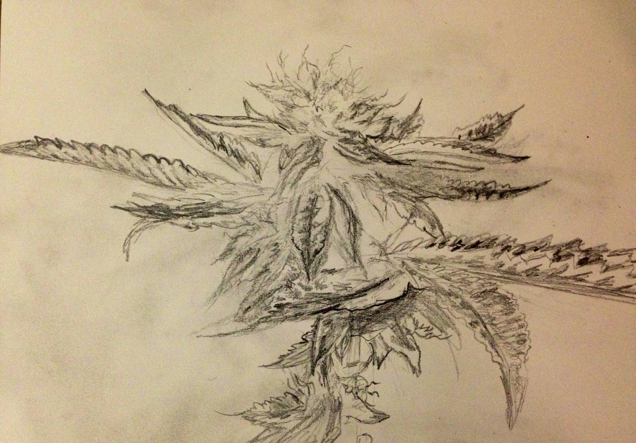 Drawn pot plant pencil drawing A of will drawing plant