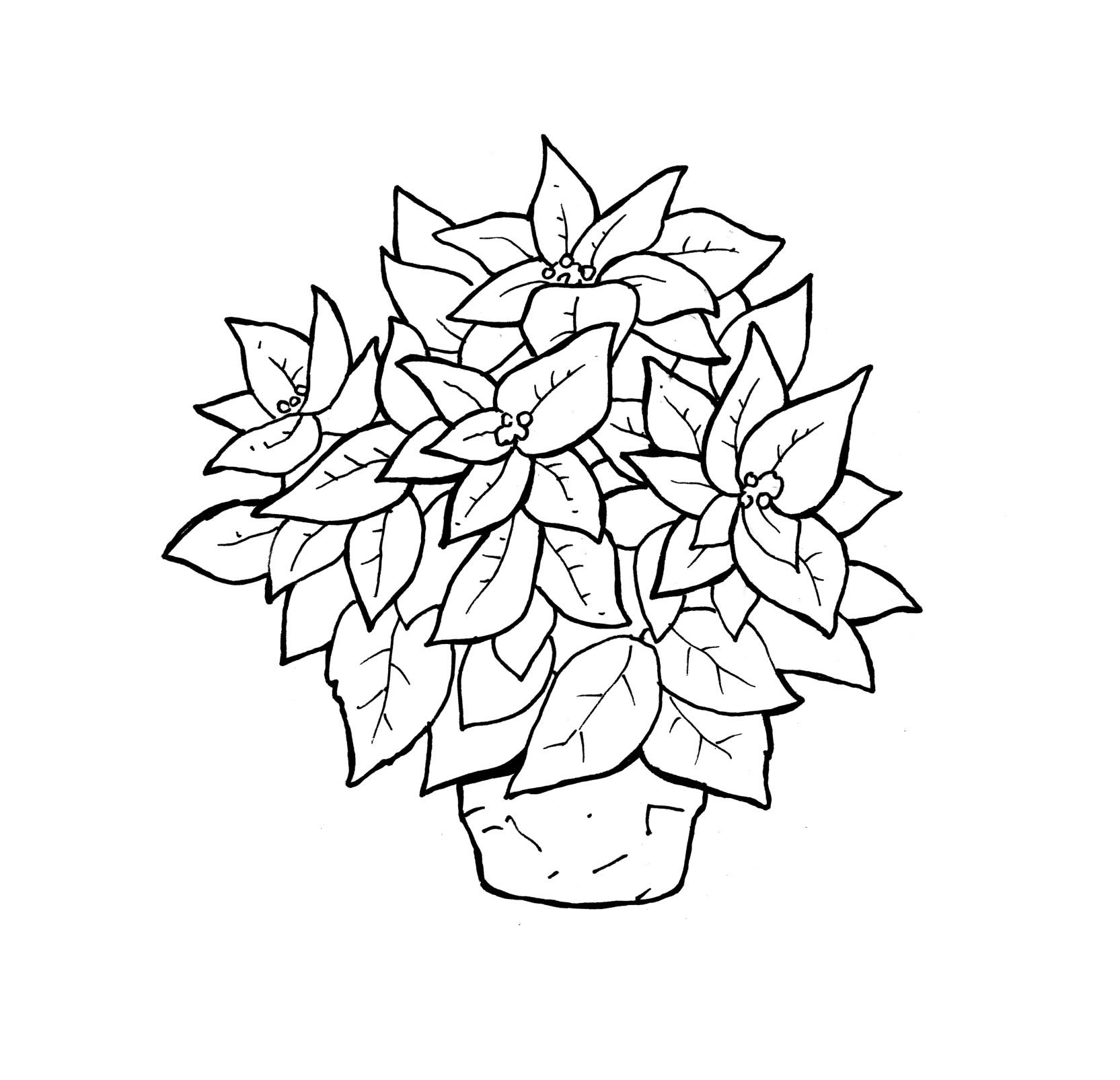 Poinsettia clipart printable Printable Free For Poinsettia Pages