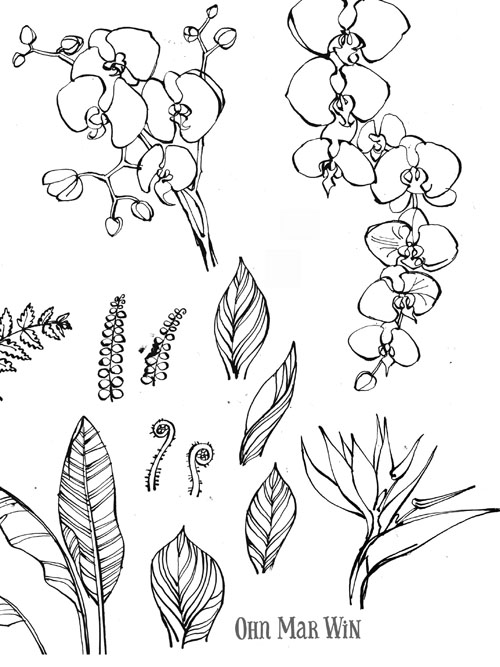Drawn rainforest rainforest plant The Global the Wall the
