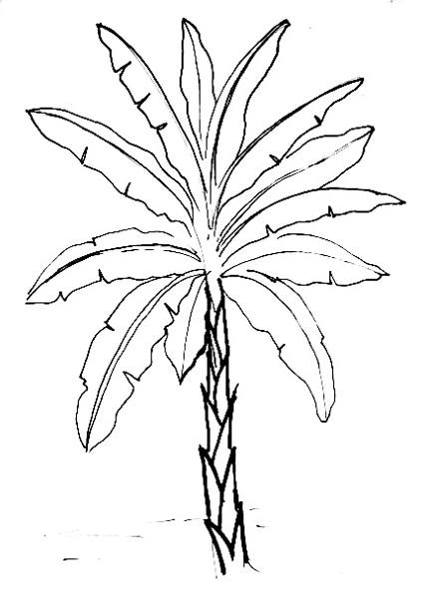 Drawn plant realistic Banana by How drawn is