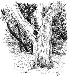 Drawn plant realistic Search Google Tree for trees