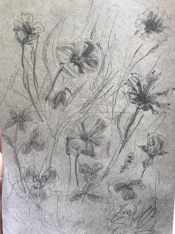 Drawn plant realistic Flower Grey Drawing Sketch Meadow
