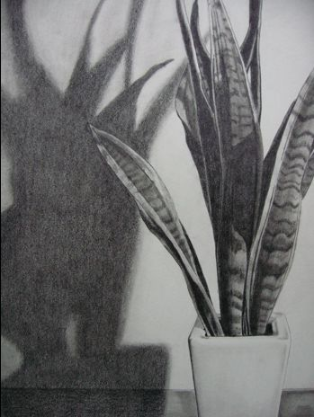 Drawn plant realistic  Search Google How Draw