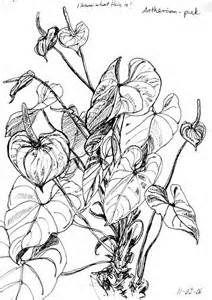 Drawn plant realistic Rocks Bing plants best to