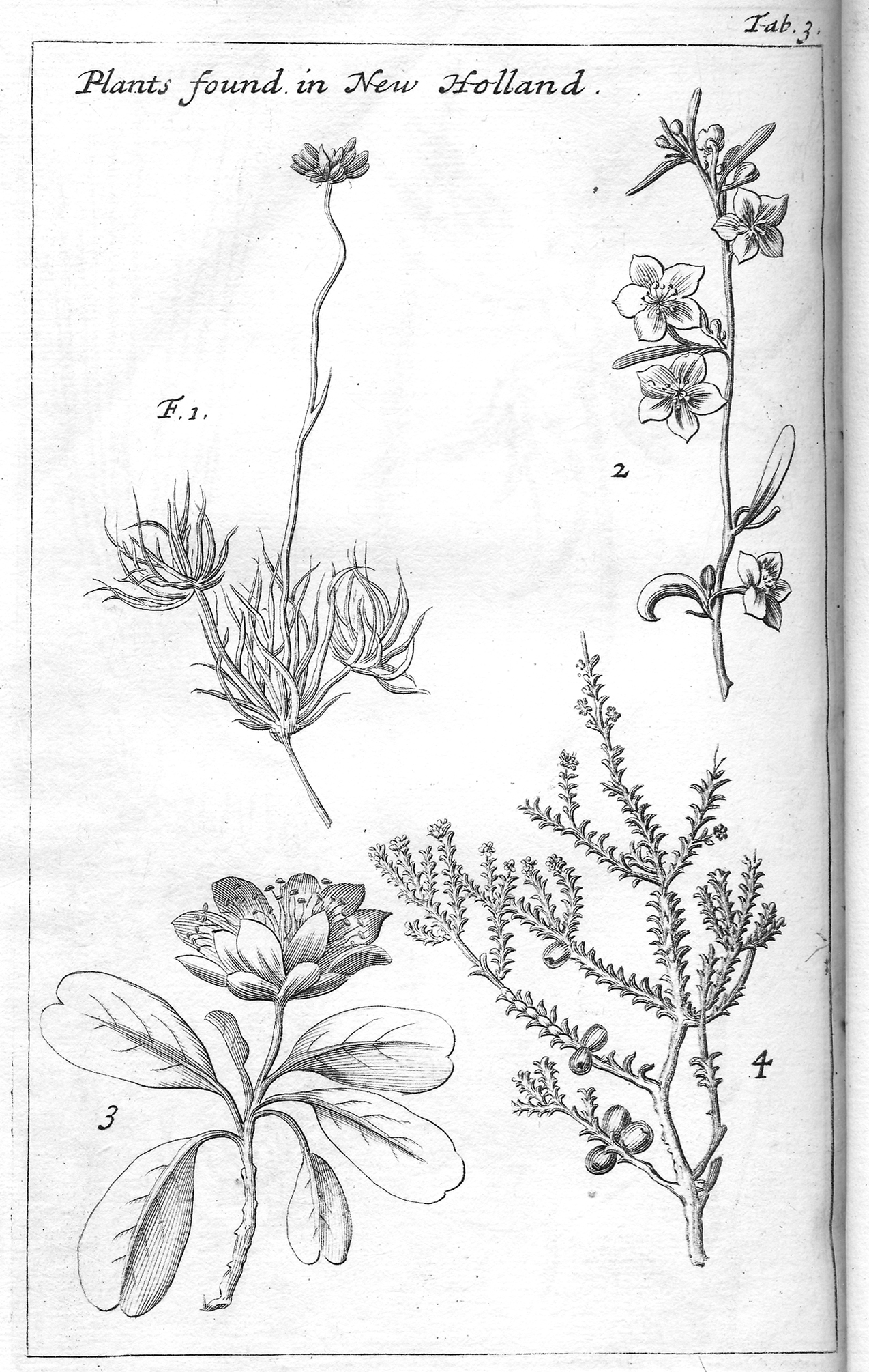 Drawn plant scientific Dampier  William