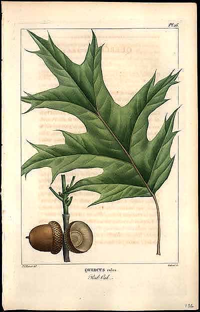 Drawn plant scientific Portrayed: from Rare Illustrated Books
