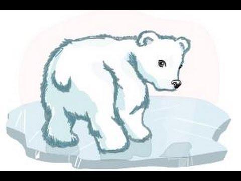 Drawn polar  bear To a to draw How
