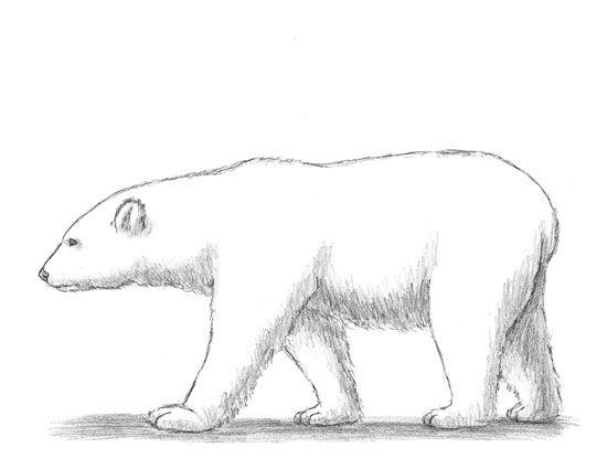 Drawn polar  bear Polar a to Draw How