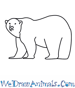 Drawn polar  bear Draw How To  Polar