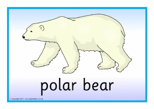 Drawn polar  bear antarctic animal (SB5499) and SparkleBox Posters Resources