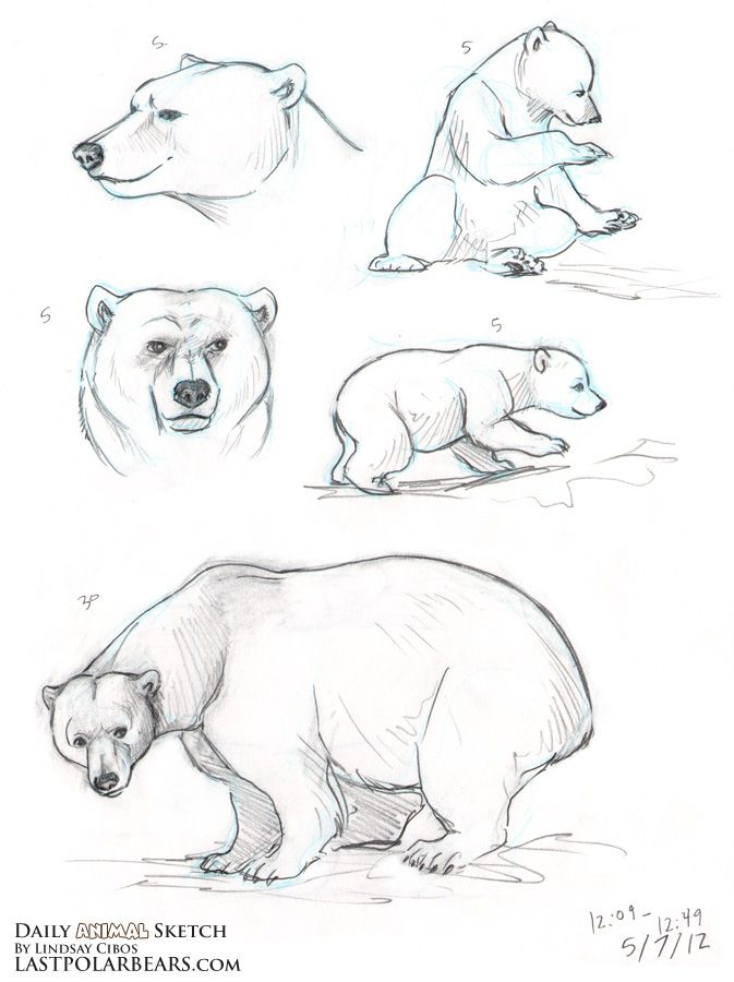 Drawn polar  bear anthro Search Pinterest images how a