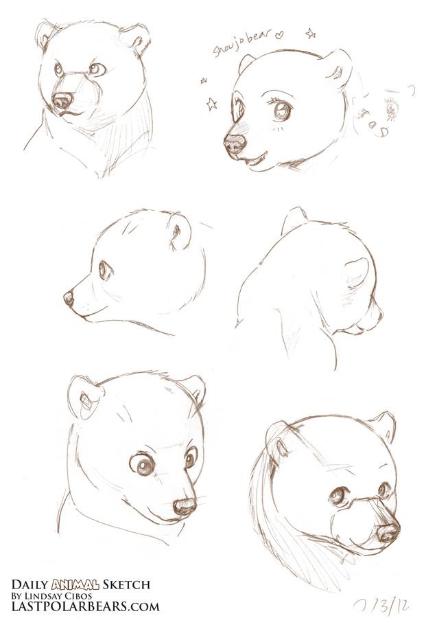Drawn polar  bear arctic animal #3