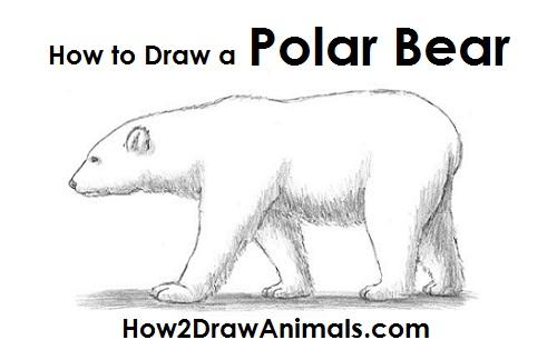 Drawn polar  bear arctic animal #7