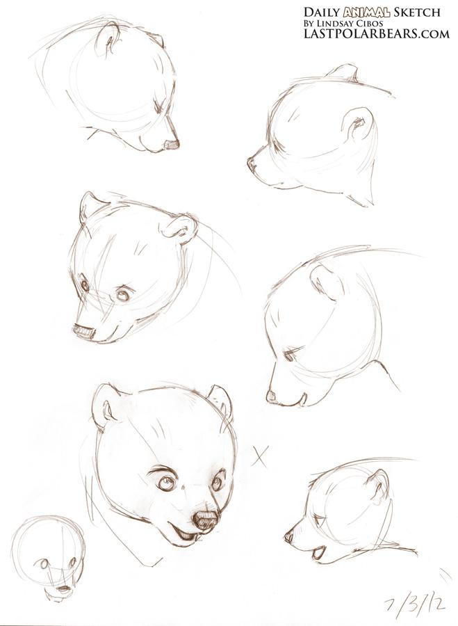 Drawn polar  bear arctic animal #5