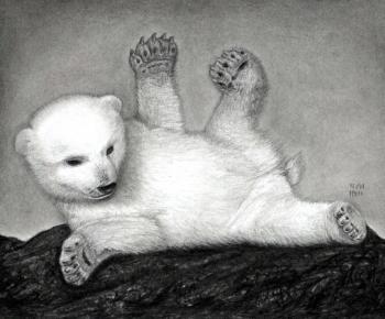 Drawn polar  bear arctic animal #6