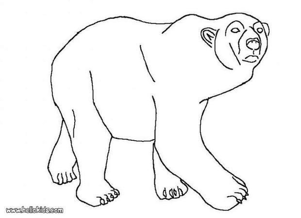Drawn polar  bear arctic animal #4