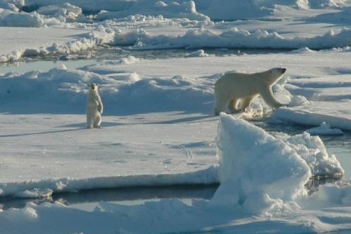 Drawn polar  bear arctic landscape Arctic Arctic Landscapes and Peoples