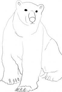 Drawn polar  bear arctic landscape How Step Blue Landscape via