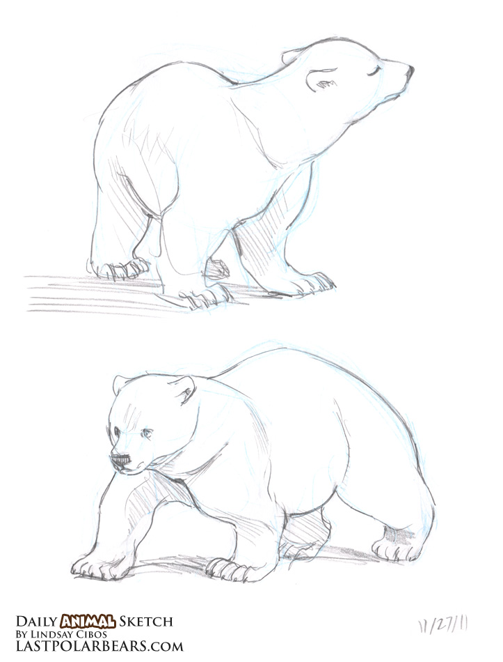 Drawn polar  bear arctic landscape The Daily the of Sketch